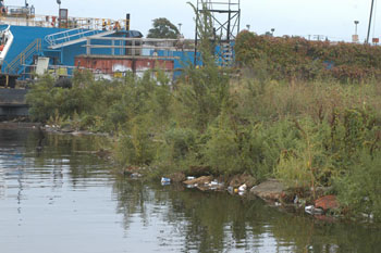 Trash and weeds line the shore near General Ship Repair Corp.'s shipyard in Baltimore. CNS photo by Aleksandra Robinson.